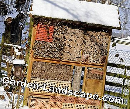 Insect hotel in winter