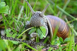 Snails garden prevent tips