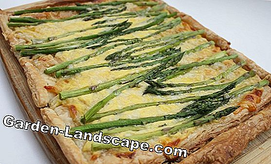 Swiss Chard Puff Quiche: receta simple para cocinar