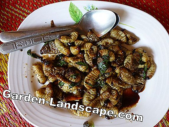 Canned Insect Hotel - petunjuk dan tips