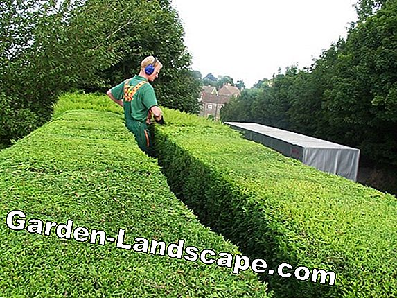 Hedge cut forbidden in the summer? That's what the law says