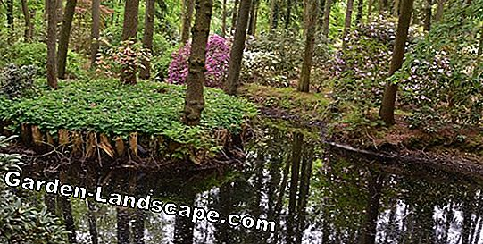 Rhododendron Park Hobbie: 5 x 2 billetter til at vinde
