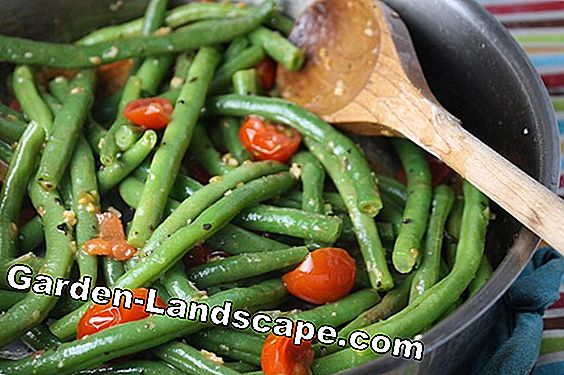Harvest green asparagus: this is the best way to use the short harvest time