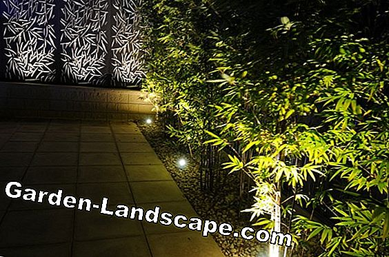 Illuminate garden path with solar lamps - 4 creative ideas