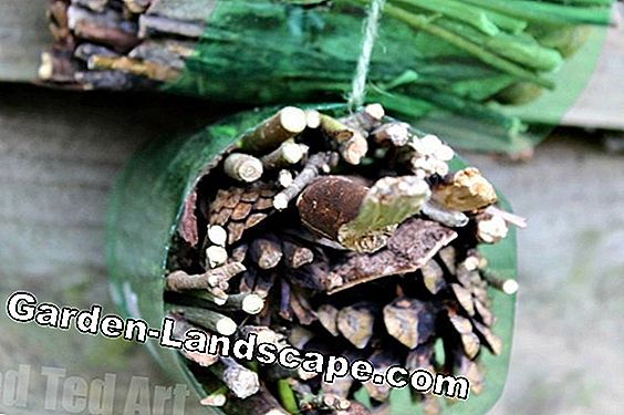 Build insect hotel from tree trunk - instructions and tips