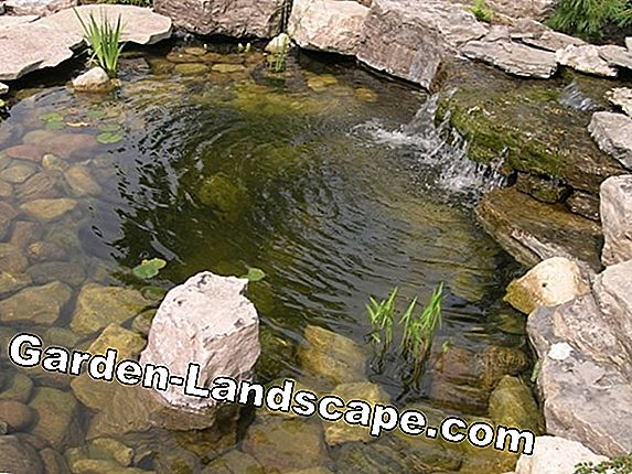Natural water purification in the swimming pond - it depends on the plants!