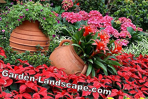 Shrubs popular in ornamental garden - small overview