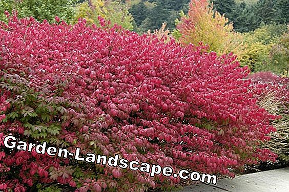Spring shrubs - red, white, blue and yellow varieties