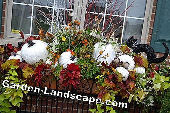Decorate flower boxes for autumn and winter