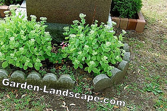Grave planting in summer - ideas for cemetery planting