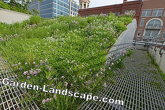 Intensive roof greening - plants, construction and costs