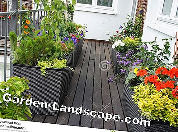 Terrace design with flowers