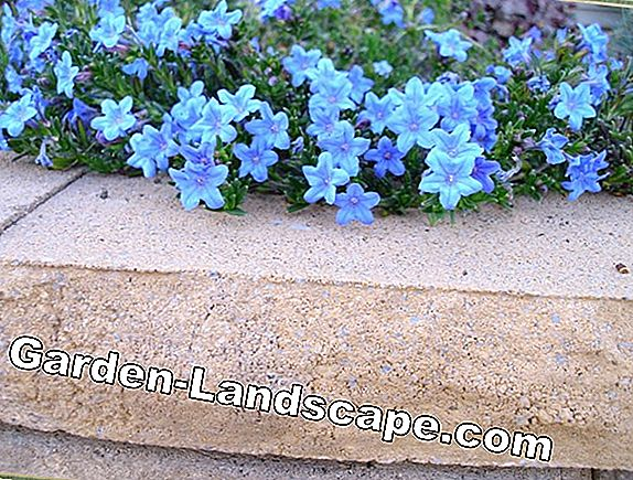 Wonderful plants for the rock garden - List of A-Z