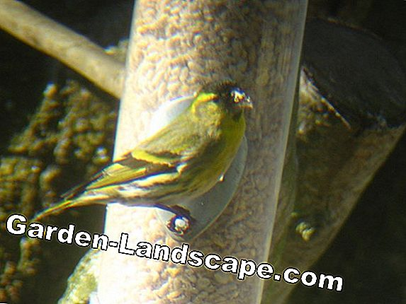 Garden birds - breeding season, destination, in winter
