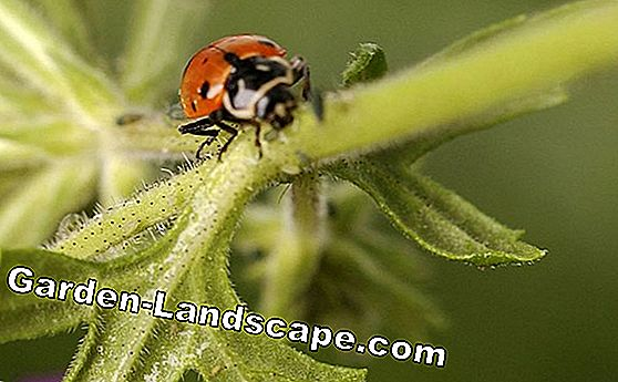 Aphids: 10 tips to combat