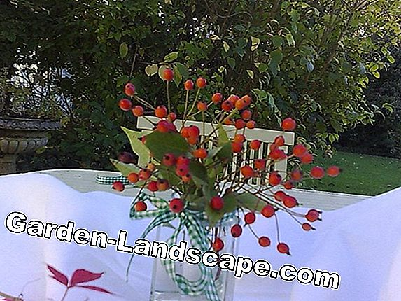 Creative idea: Table runner in autumn look