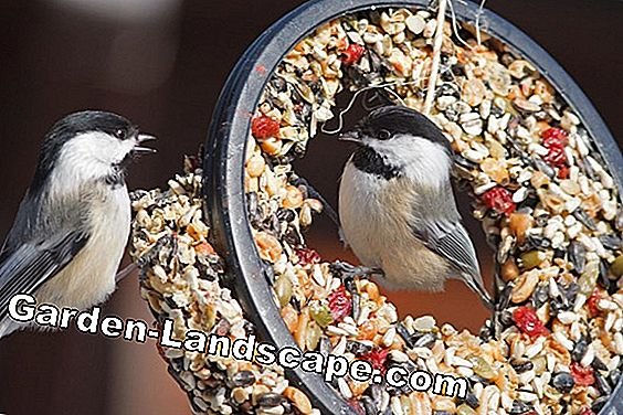 The eye eats with: bird food creatively prepared