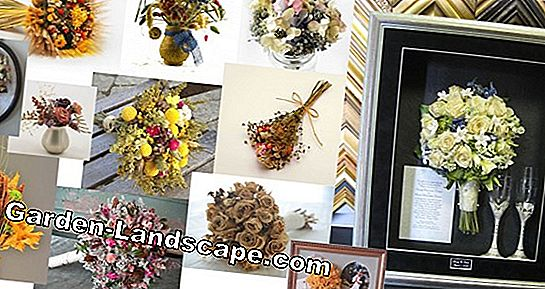 Dried flowers: Preserve the colors of the season