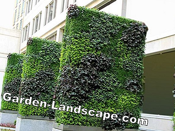 Vertical garden: high up with living greenery