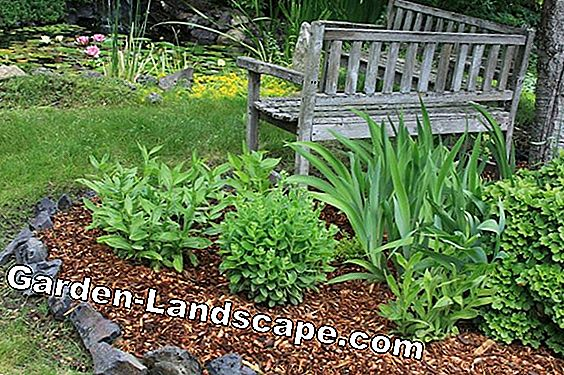 Bark mulch - prevention of weeds