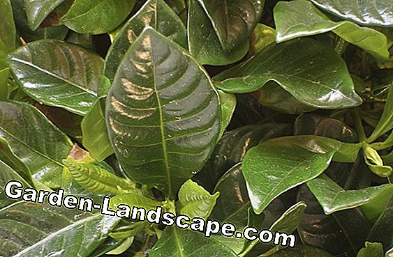 Compost foliage - tips for foliage composter