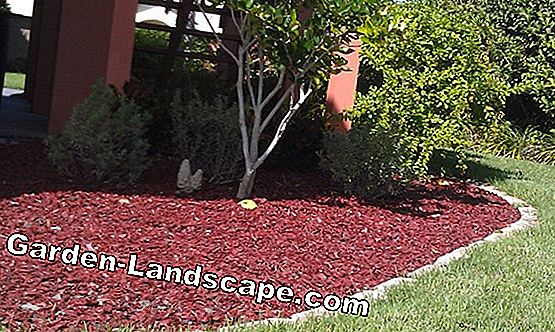 Pine bark mulch - alternative to the bark mulch?