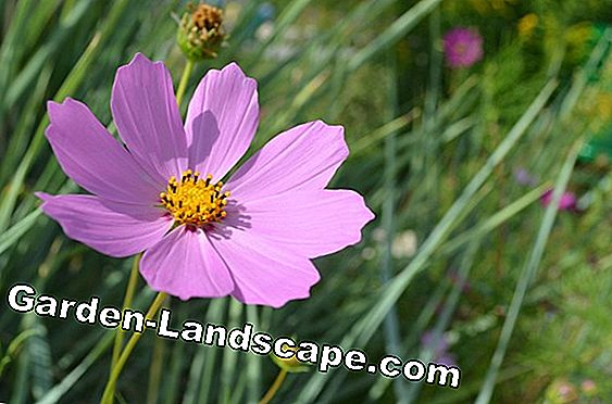 Flowers for the farmer garden: Flowering plant protection