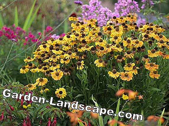 10 Tips about flowerbeds in autumn