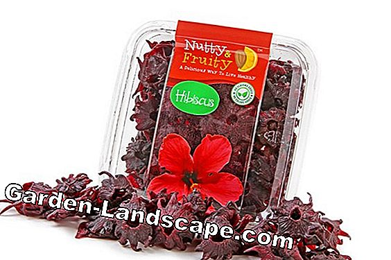 Edible hibiscus flowers for sparkling wine and decoration made by yourself