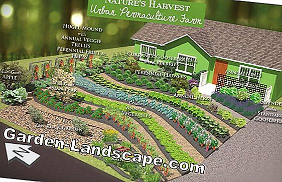 Design ideas for a plot with lots of lawn