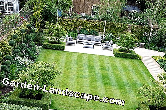 Garden ideas to the square