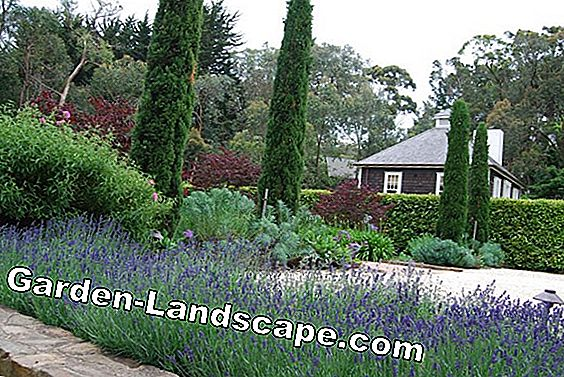 Garden planning service: Your garden designed by the professional
