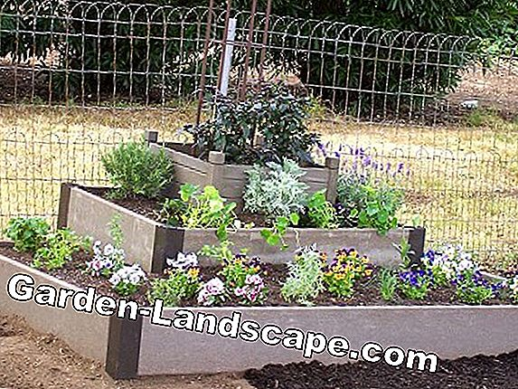 Instant Gardening: perennial beds from the bar