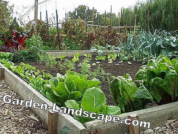 Vegetable garden - self-sufficiency from own garden cultivation