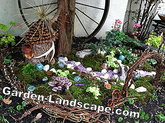 Miniature gardens: Small but fine