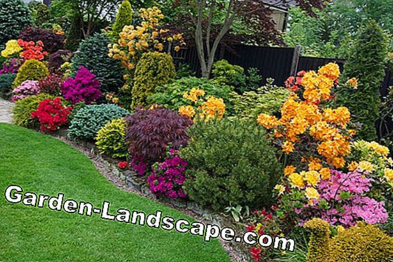 Perennial beds in violet