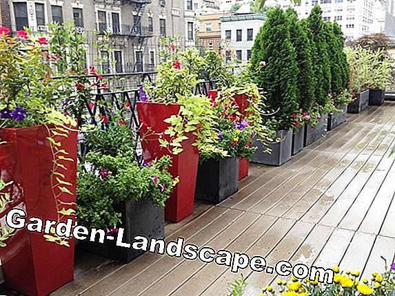 Planting a sunny roof terrace & patio