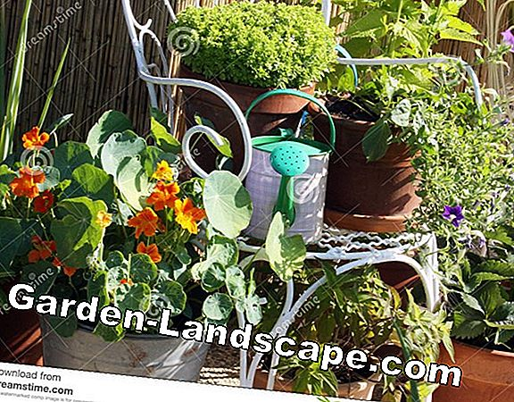 Container plants on balcony & terrace