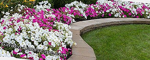 For replanting: A flowerbed in light tones