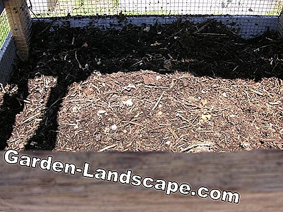 For replanting: A spring bed on the garden fence