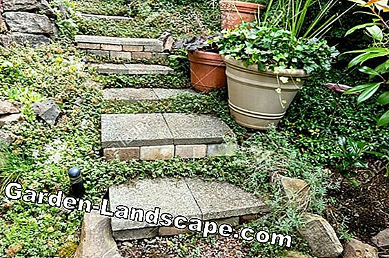 Stone garden perennials - perennials for rockeries