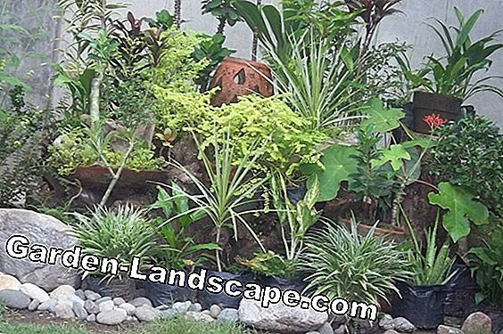 Planting rock garden plants & shrubs