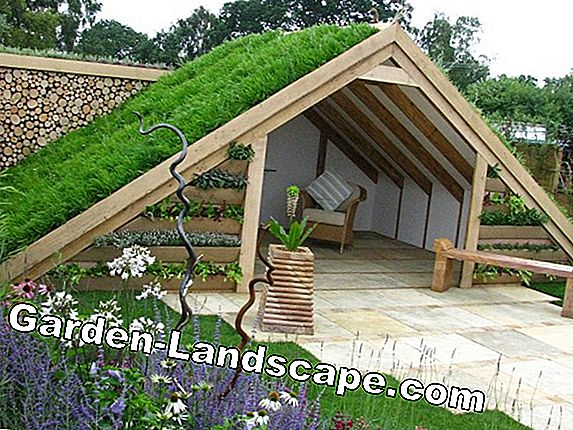 Roof Garden - Ideas for green roofs and use