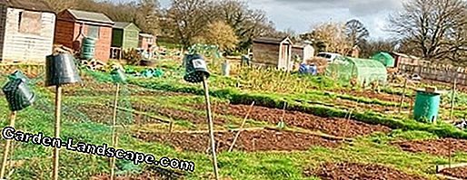 Landscaping Fun In The Allotment Garden And Allotment Garden My