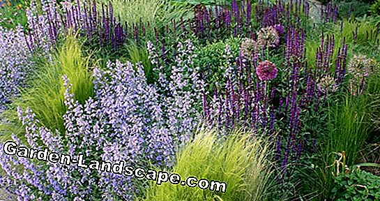 Trendy perennial combinations