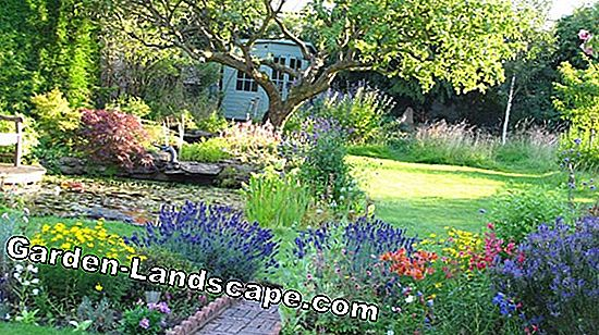 Vegetable garden with flowery border