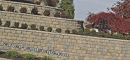 Design the garden with natural stone