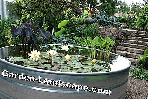 Water troughs in the garden: decorative & practical