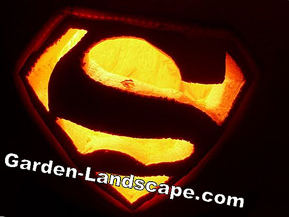 Carving pumpkin - templates and patterns