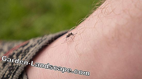 Home remedies for mosquitoes in summer